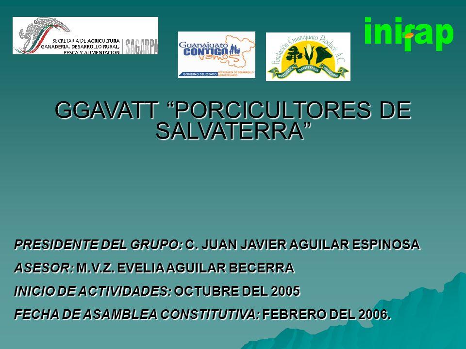 GGAVATT PORCICULTORES DE SALVATERRA PRESIDENTE DEL GRUPO: C. JUAN JAVIER AGUILAR ESPINOSA ASESOR: M.V.Z. EVELIA AGUILAR BECERRA INICIO DE ACTIVIDADES: