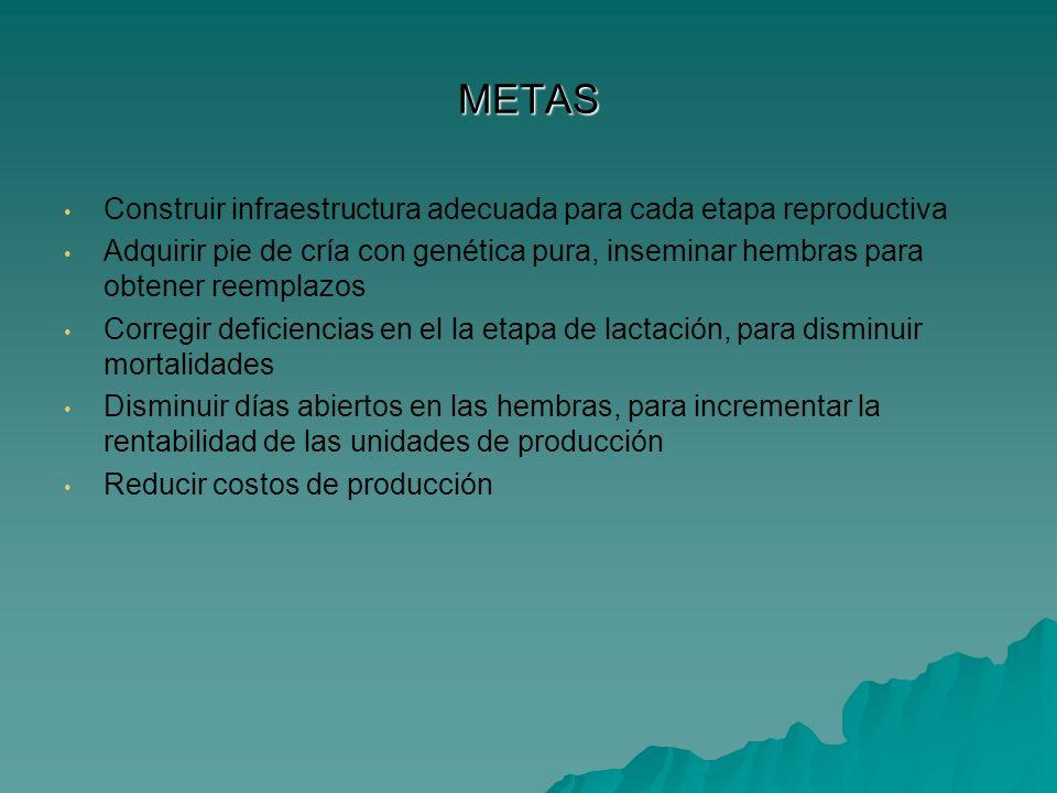 METAS Construir infraestructura adecuada para cada etapa reproductiva Adquirir pie de cría con genética pura, inseminar hembras para obtener reemplazo