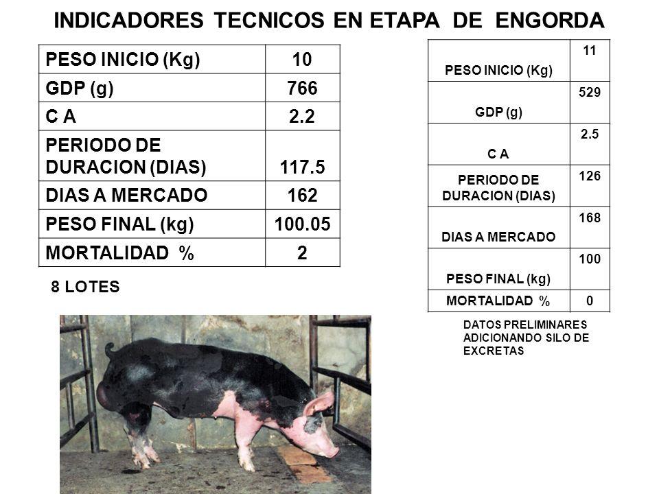 INDICADORES TECNICOS EN ETAPA DE ENGORDA PESO INICIO (Kg)10 GDP (g)766 C A2.2 PERIODO DE DURACION (DIAS)117.5 DIAS A MERCADO162 PESO FINAL (kg)100.05