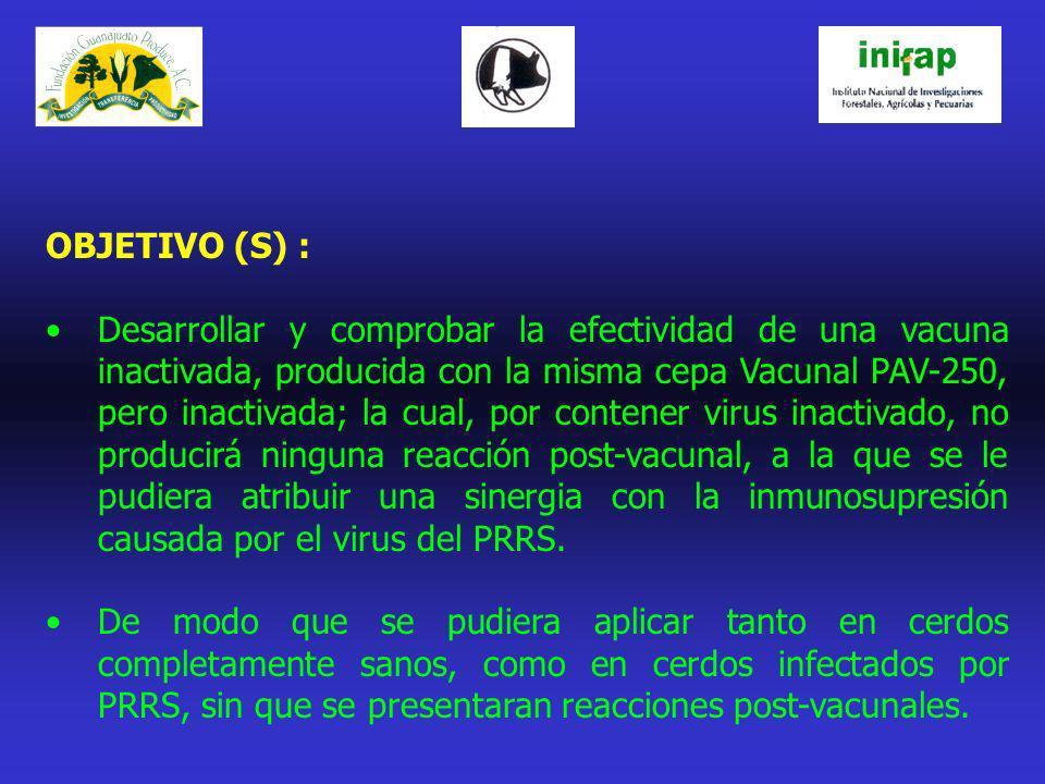 OBJETIVO (S) : Desarrollar y comprobar la efectividad de una vacuna inactivada, producida con la misma cepa Vacunal PAV-250, pero inactivada; la cual,