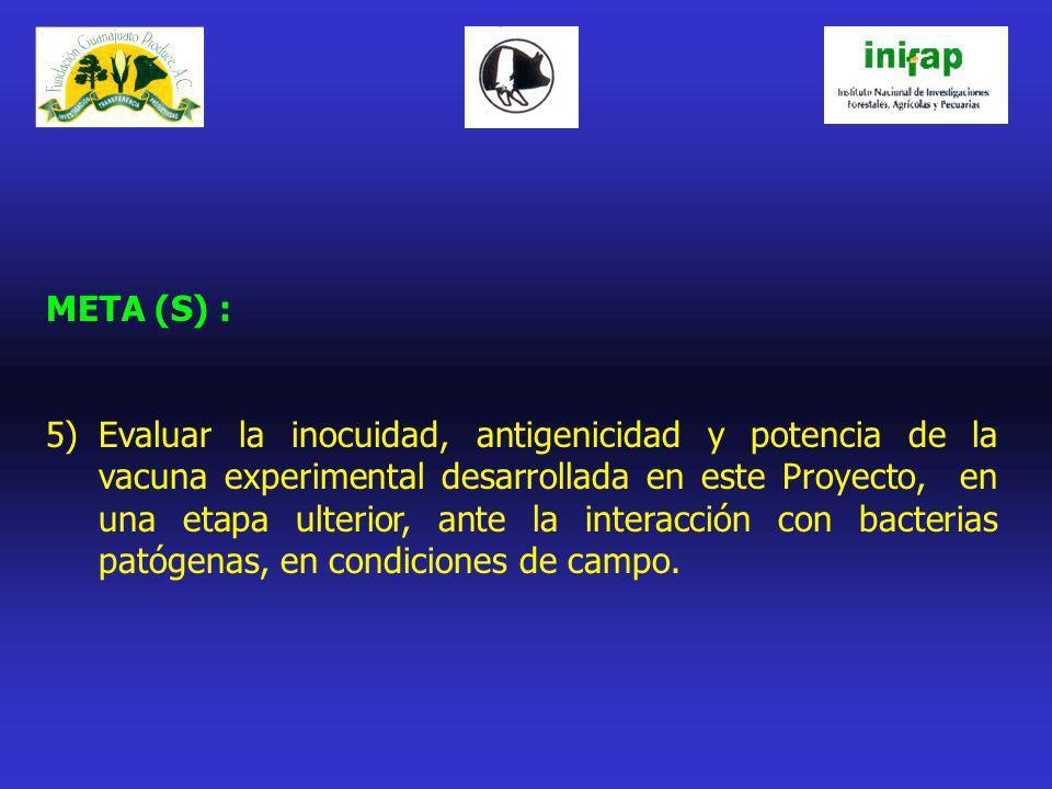 META (S) : 5)Evaluar la inocuidad, antigenicidad y potencia de la vacuna experimental desarrollada en este Proyecto, en una etapa ulterior, ante la in