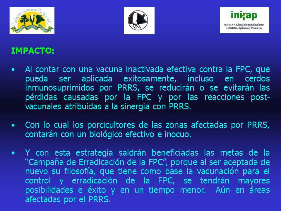 IMPACTO: Al contar con una vacuna inactivada efectiva contra la FPC, que pueda ser aplicada exitosamente, incluso en cerdos inmunosuprimidos por PRRS,