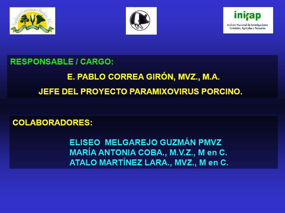 RESPONSABLE / CARGO: E. PABLO CORREA GIRÓN, MVZ., M.A. JEFE DEL PROYECTO PARAMIXOVIRUS PORCINO. COLABORADORES: ELISEO MELGAREJO GUZMÁN PMVZ MARÍA ANTO