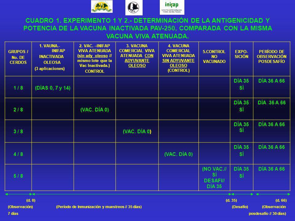 GRUPOS / No. DE CERDOS 1. VAUNA.- INIFAP INACTIVADA OLEOSA (3 aplicaciones) 2. VAC. –INIFAP VIVA ATENUADA (sin ady oleoso // mismo lote que la Vac Ina