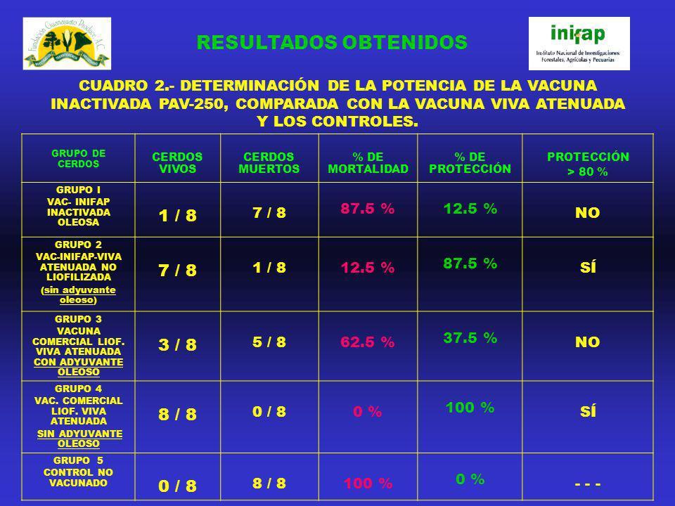 CUADRO 2.- DETERMINACIÓN DE LA POTENCIA DE LA VACUNA INACTIVADA PAV-250, COMPARADA CON LA VACUNA VIVA ATENUADA Y LOS CONTROLES. GRUPO DE CERDOS CERDOS