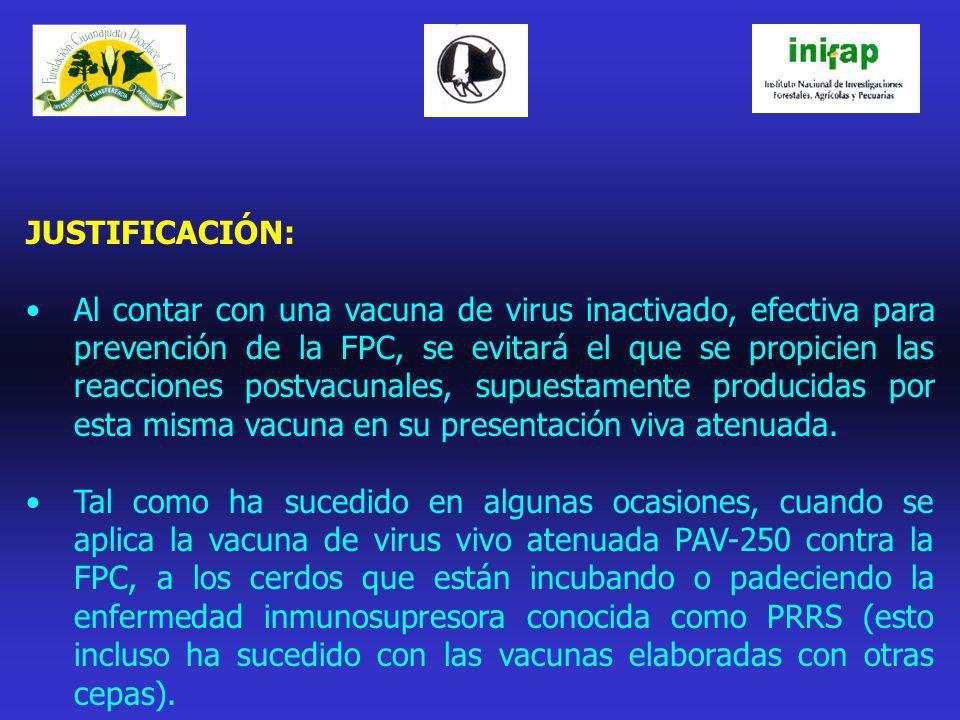 JUSTIFICACIÓN: Al contar con una vacuna de virus inactivado, efectiva para prevención de la FPC, se evitará el que se propicien las reacciones postvac