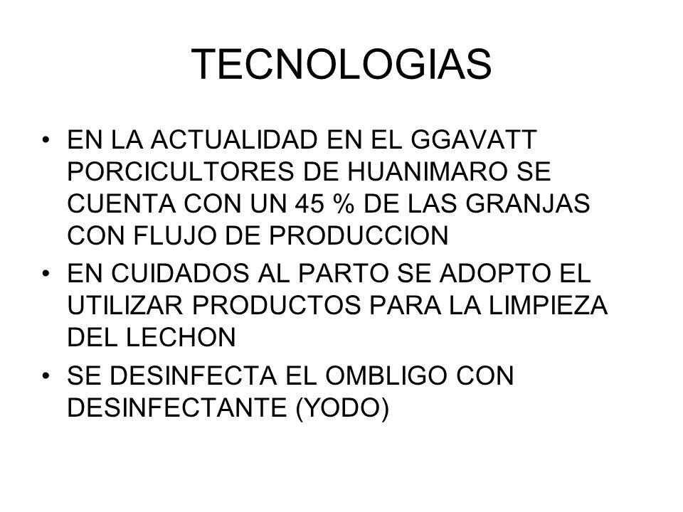 TECNOLOGIAS EN LA ACTUALIDAD EN EL GGAVATT PORCICULTORES DE HUANIMARO SE CUENTA CON UN 45 % DE LAS GRANJAS CON FLUJO DE PRODUCCION EN CUIDADOS AL PART