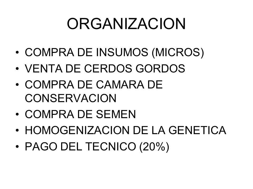 ORGANIZACION COMPRA DE INSUMOS (MICROS) VENTA DE CERDOS GORDOS COMPRA DE CAMARA DE CONSERVACION COMPRA DE SEMEN HOMOGENIZACION DE LA GENETICA PAGO DEL