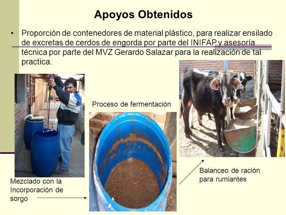 Proporción de contenedores de material plástico, para realizar ensilado de excretas de cerdos de engorda por parte del INIFAP y asesoría técnica por p