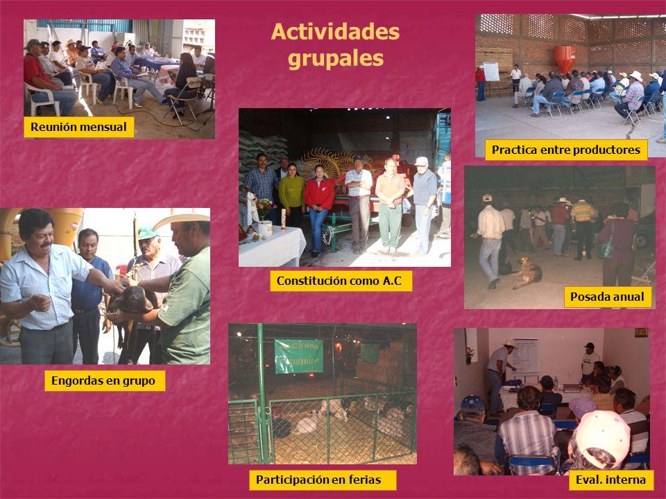 Actividades grupales Reunión mensual Practica entre productores Eval. interna Constitución como A.C Participación en ferias foto Posada anual Engordas