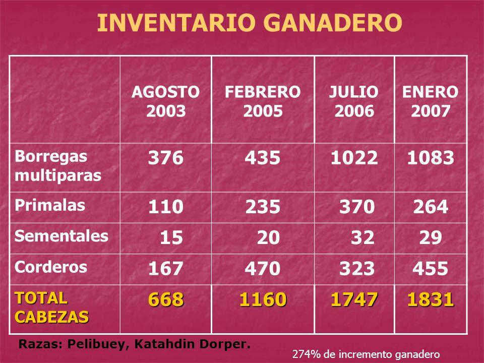 INVENTARIO GANADERO AGOSTO 2003 FEBRERO 2005 JULIO 2006 ENERO 2007 Borregas multiparas 37643510221083 Primalas 110235 370264 Sementales 15 20 3229 Cor