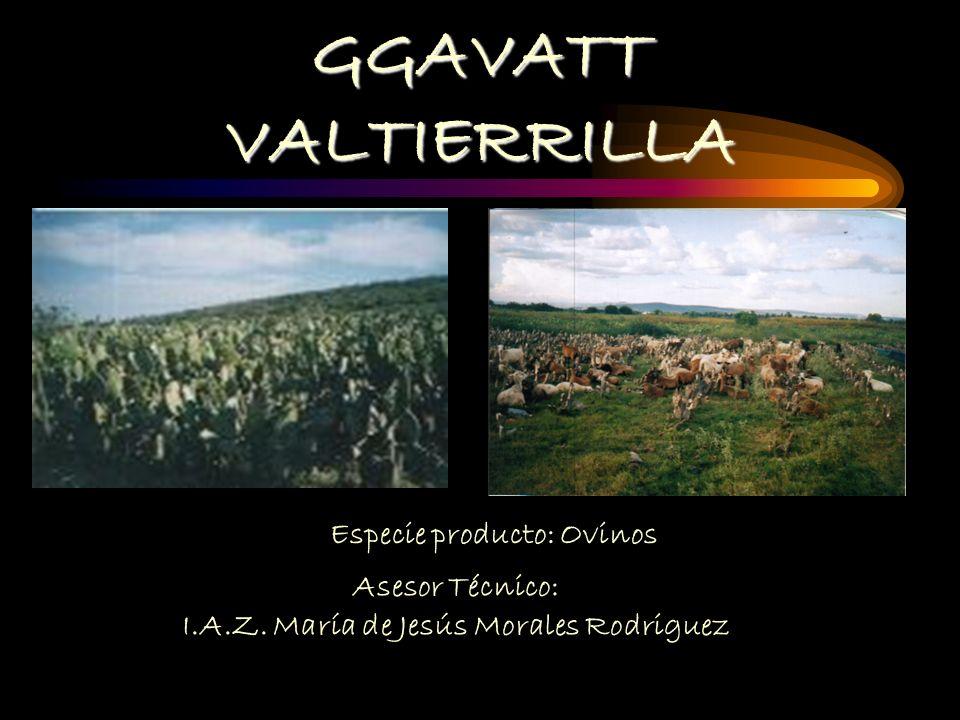 GGAVATT VALTIERRILLA Especie producto: Ovinos Asesor Técnico: I.A.Z.