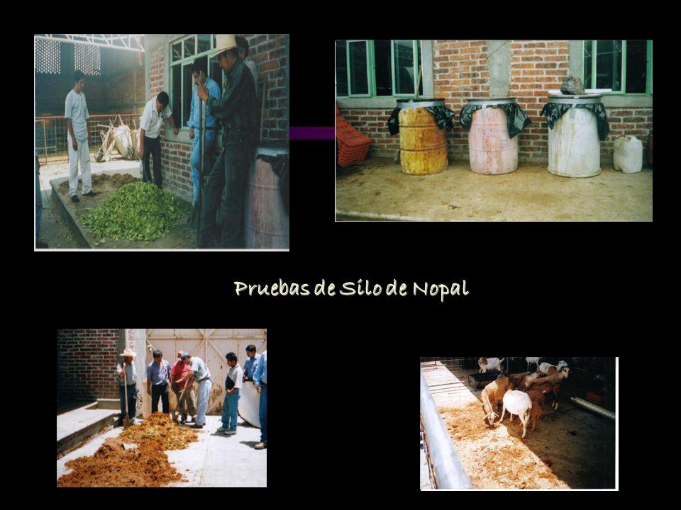 Capacitacion a productores Platicas impartidas: 3 Explicación del modelo GGAVATT Elaboración de diferentes tipos de silo de nopal Platica de condicion corporal en los animales Giras: 3 Asistencia al Encuentro Estatal de GGAVATTS Apaseo El Grande, Gto.
