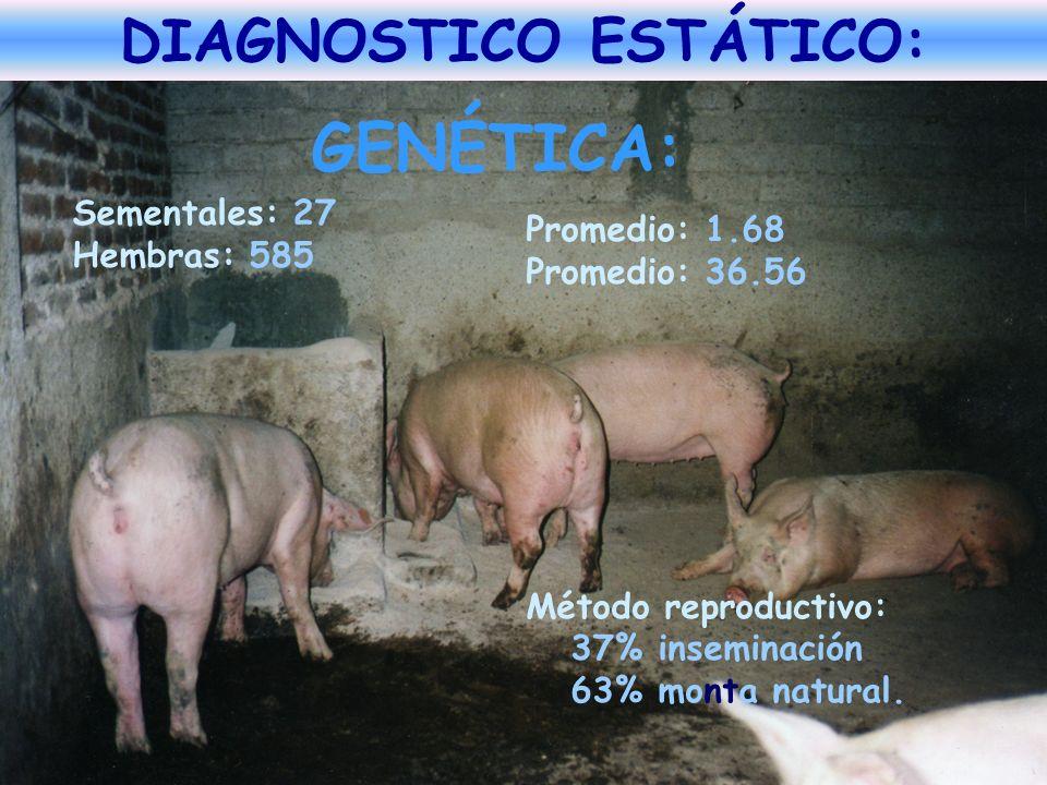 GENÉTICA: Sementales: 27 Hembras: 585 Promedio: 1.68 Promedio: 36.56 Método reproductivo: 37% inseminación 63% monta natural. ADOPCIÓN DE TECNOLOGÍAS: