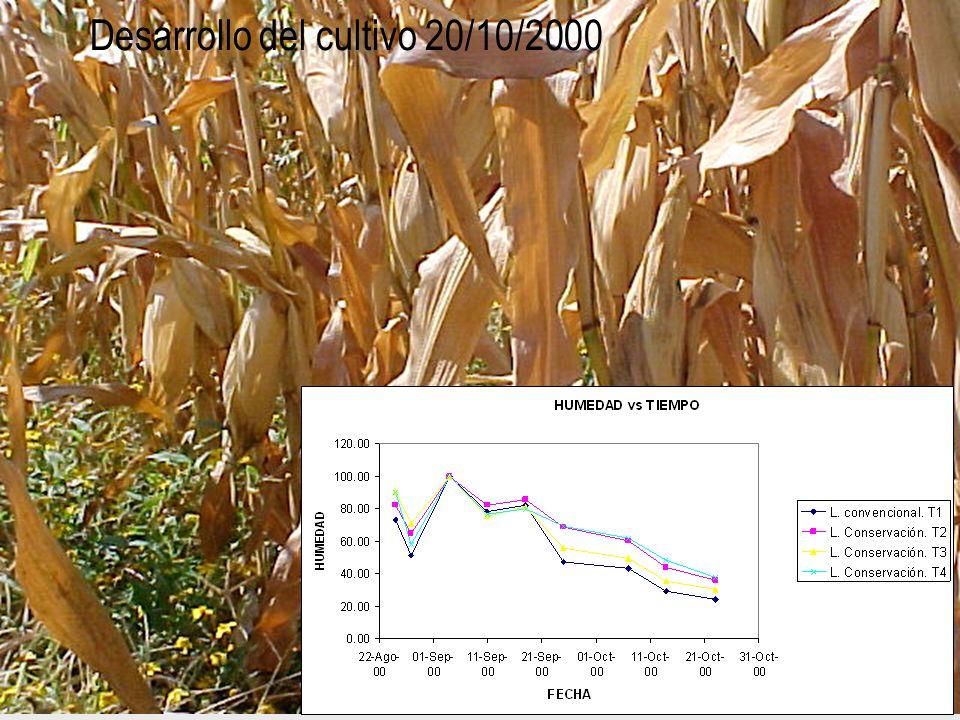 Desarrollo del cultivo 20/10/2000
