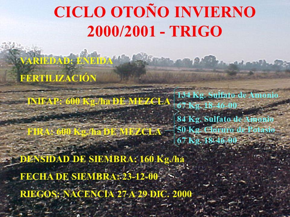 CICLO OTOÑO INVIERNO 2000/2001 - TRIGO 134 Kg. Sulfato de Amonio 67 Kg. 18-46-00 VARIEDAD: ENEIDA FERTILIZACIÓN INIFAP: 600 Kg./ha DE MEZCLA FIRA: 600