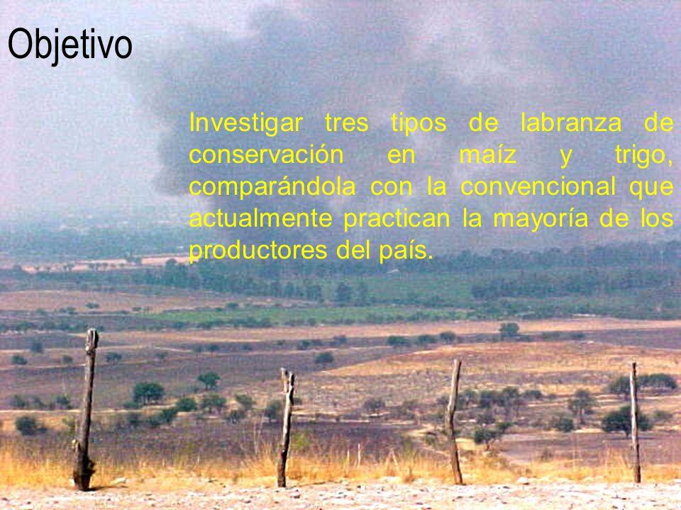 Datos del cultivo Variedad: Híbrido Maíz A-791 Fecha de siembra: 17/mayo/2000 Riego de Germinación: 22/05/2000 Fertilización a la siembra: Formula FIRA: 80-150-90.