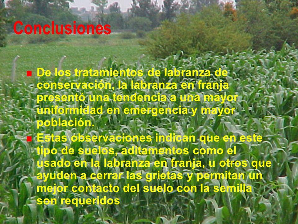 Conclusiones De los tratamientos de labranza de conservación, la labranza en franja presentó una tendencia a una mayor uniformidad en emergencia y may