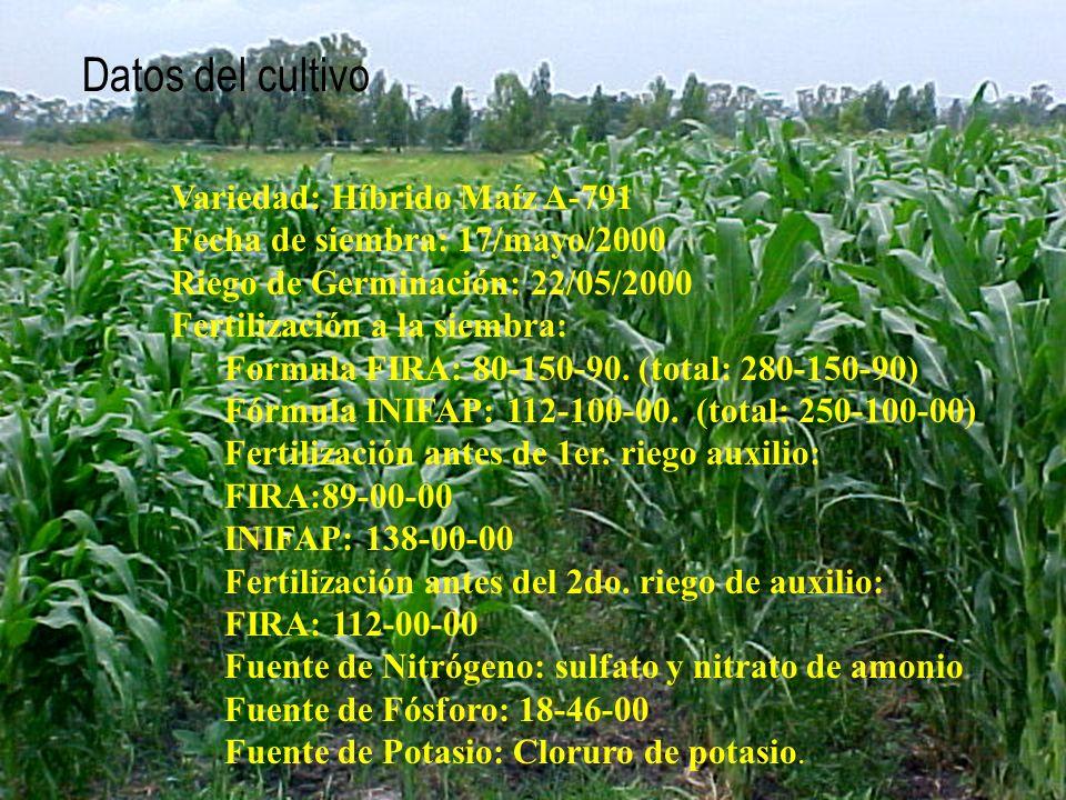 Datos del cultivo Variedad: Híbrido Maíz A-791 Fecha de siembra: 17/mayo/2000 Riego de Germinación: 22/05/2000 Fertilización a la siembra: Formula FIR