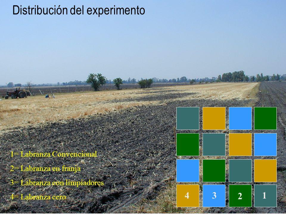 2 Distribución del experimento 134 1= Labranza Convencional 2= Labranza en franja 3= Labranza con limpiadores 4= Labranza cero