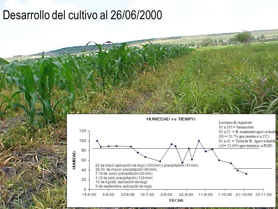 Desarrollo del cultivo al 26/06/2000 22 de mayo: aplicación de riego (120 mm) y precipitación (33 mm) 26-30 de mayor: precipitación (90 mm) 7-14 de ju