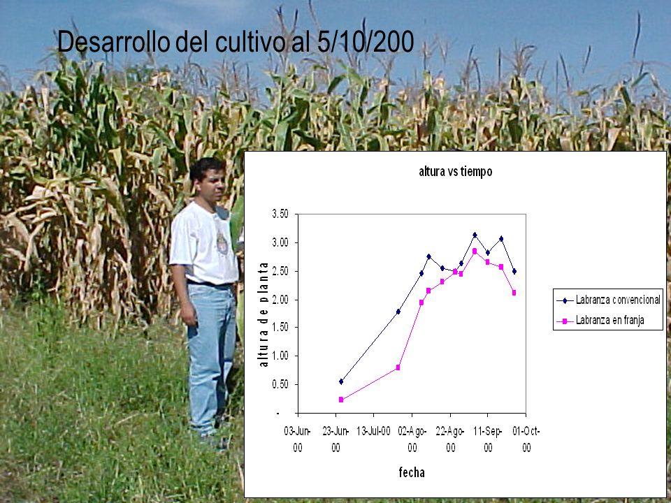 Desarrollo del cultivo al 5/10/200