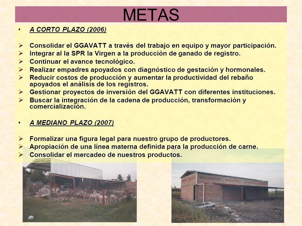 METAS A CORTO PLAZO (2006) Consolidar el GGAVATT a través del trabajo en equipo y mayor participación. Integrar al la SPR la Virgen a la producción de