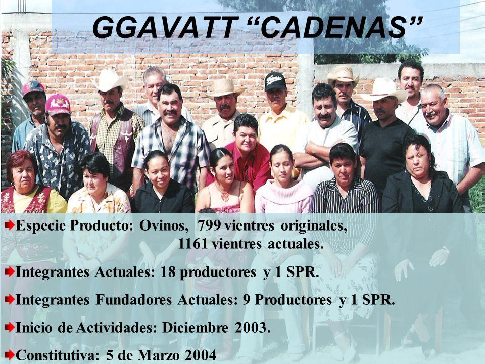 GGAVATT CADENAS Especie Producto: Ovinos, 799 vientres originales, 1161 vientres actuales. Integrantes Actuales: 18 productores y 1 SPR. Integrantes F