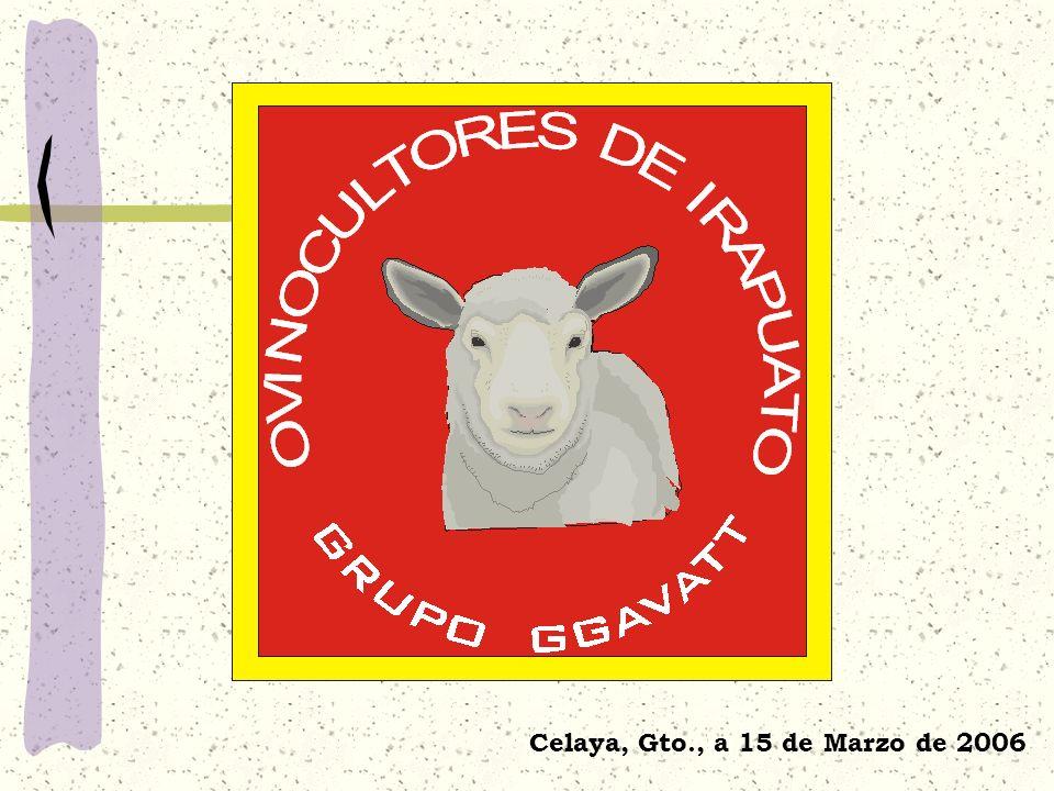 GGAVATT Ovinocultores de Irapuato Integrantes actuales 12 de los cuales 2 son fundadores Ingreso de nuevos productores:10 meses Promedio de escolaridad: 2 o año de licenciatura Edad promedio: 47 años Grado de dependencia económica de la actividad: 42%