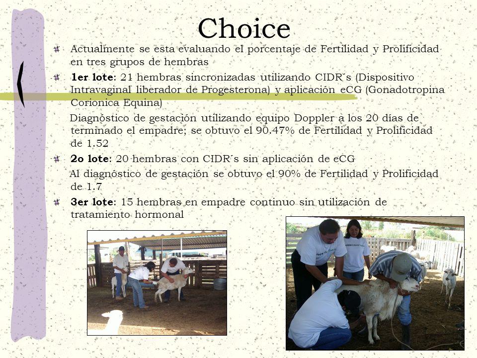 Choice Actualmente se esta evaluando el porcentaje de Fertilidad y Prolificidad en tres grupos de hembras 1er lote : 21 hembras sincronizadas utilizan