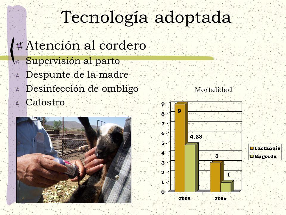 Tecnología adoptada Atención al cordero Supervisión al parto Despunte de la madre Desinfección de ombligo Calostro Mortalidad