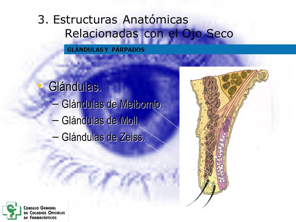 Glándulas. Glándulas. – Glándulas de Meibomio. – Glándulas de Moll. – Glándulas de Zeiss. 3. Estructuras Anatómicas Relacionadas con el Ojo Seco GLÁND