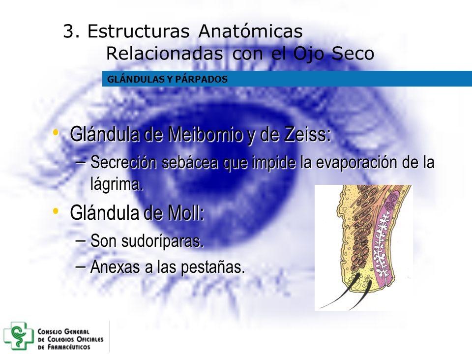 Glándula de Meibomio y de Zeiss: Glándula de Meibomio y de Zeiss: – Secreción sebácea que impide la evaporación de la lágrima. Glándula de Moll: Glánd