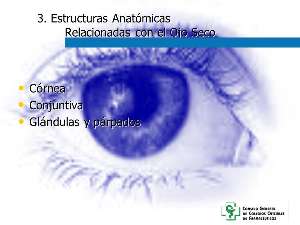 3. Estructuras Anatómicas Relacionadas con el Ojo Seco C ó rnea C ó rnea Conjuntiva Conjuntiva Gl á ndulas y p á rpados Gl á ndulas y p á rpados