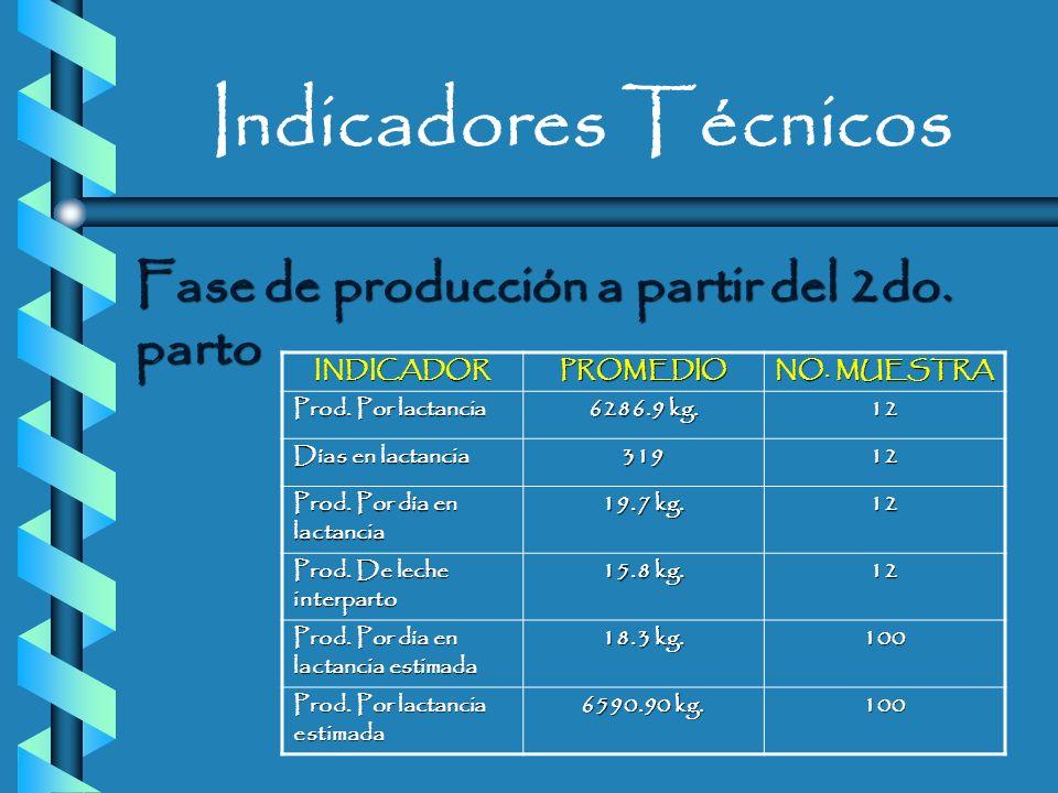Indicadores Técnicos Producción a partir del 1er. parto INDICADORPROMEDIO NO. MUESTRA Producción por día en lactancia 19.69 kg. 13 Producción por lact