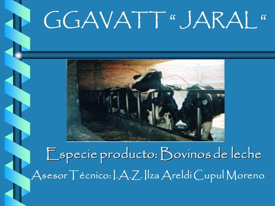 SECRETARIA DE DESARROLLO AGROPECUARIO DIRECCIÓN GENERAL DE GANADERIA DESARROLLO DE PROYECTOS AGROPECARIOS INTEGRALES INIFAP GGAVATT JARAL GGAVATT JARA