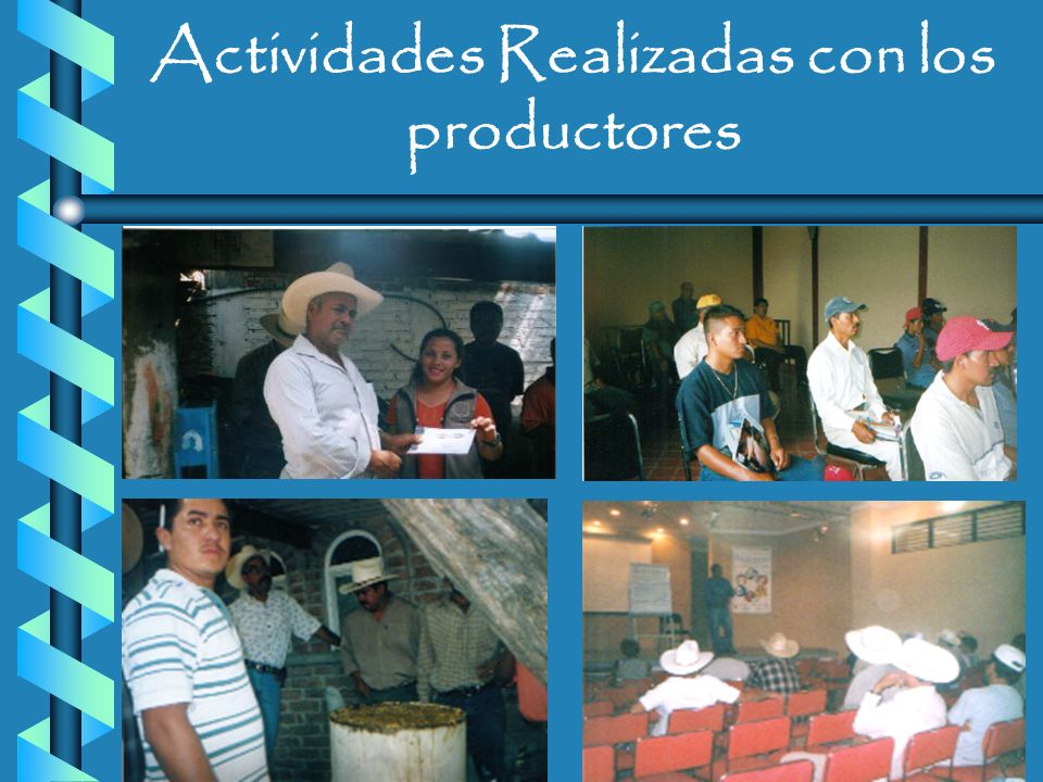 Actividades Realizadas con los productores Juntas mensuales: 1 cada mes Juntas mensuales: 1 cada mes Pláticas Técnicas Pláticas Técnicas Tripticos Tri