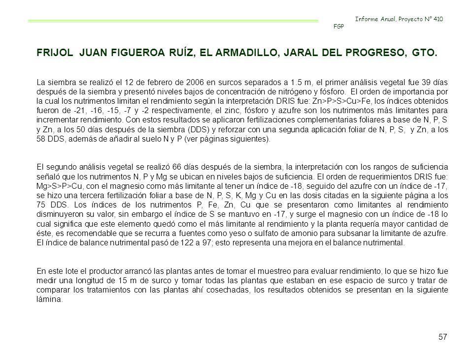 FRIJOL JUAN FIGUEROA RUÍZ, EL ARMADILLO, JARAL DEL PROGRESO, GTO. La siembra se realizó el 12 de febrero de 2006 en surcos separados a 1.5 m, el prime