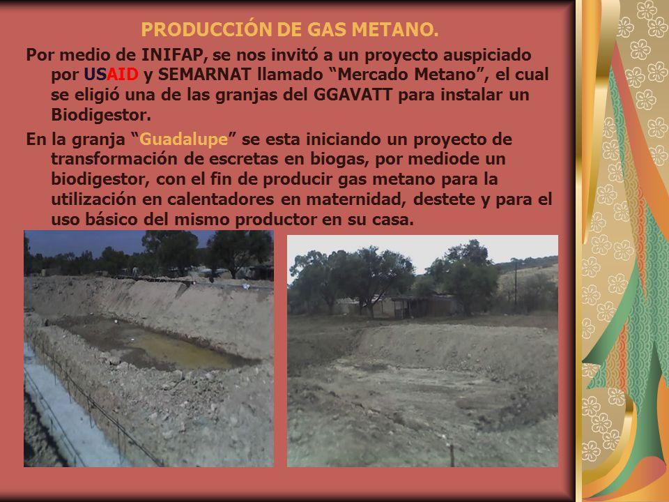 PRODUCCIÓN DE GAS METANO. Por medio de INIFAP, se nos invitó a un proyecto auspiciado por USAID y SEMARNAT llamado Mercado Metano, el cual se eligió u