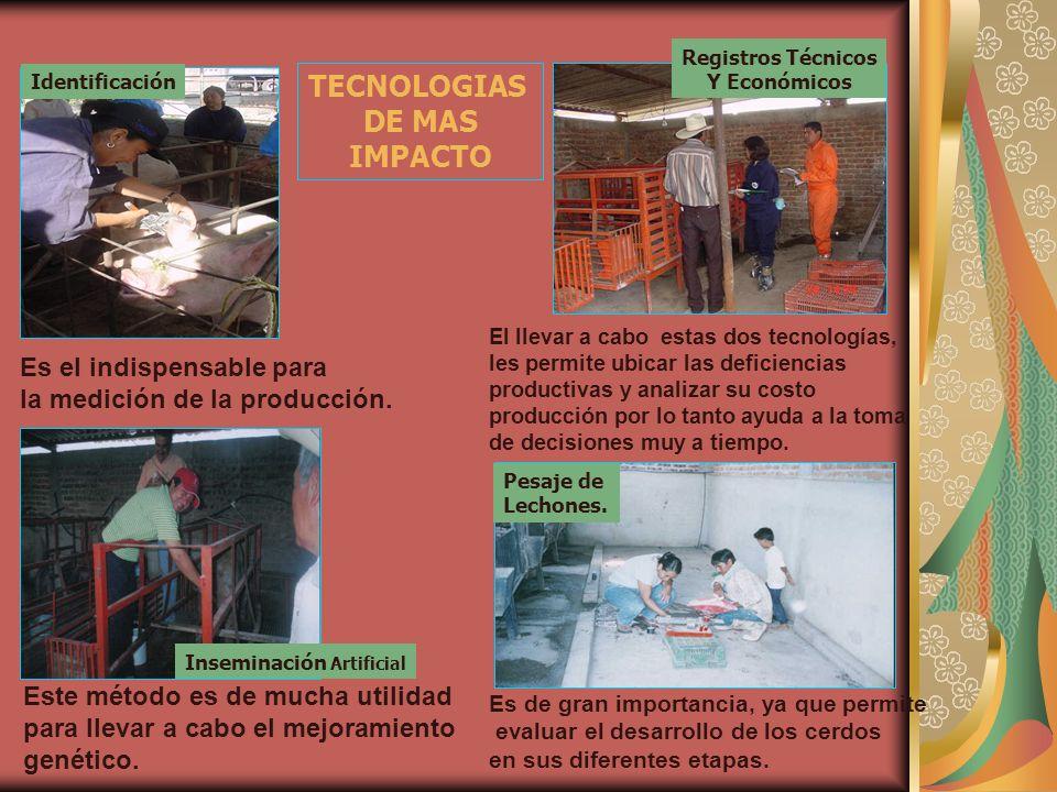 TECNOLOGIAS DE MAS IMPACTO Identificación Es el indispensable para la medición de la producción. Registros Técnicos Y Económicos El llevar a cabo esta
