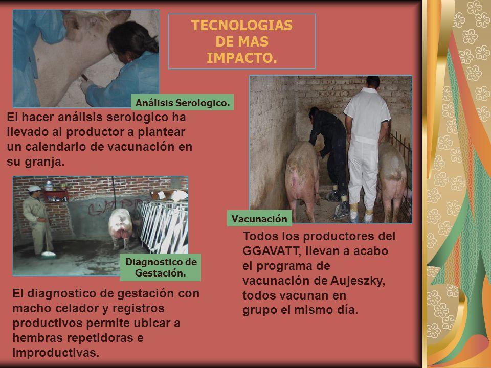 TECNOLOGIAS DE MAS IMPACTO. Vacunación El hacer análisis serologico ha llevado al productor a plantear un calendario de vacunación en su granja. Todos