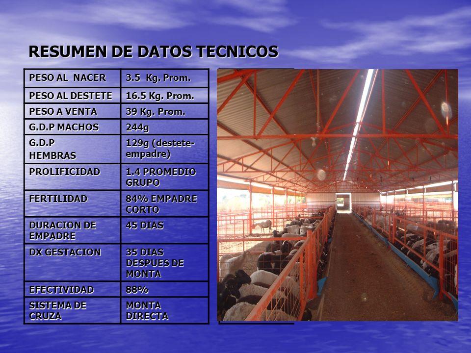 RESUMEN DE DATOS TECNICOS PESO AL NACER 3.5 Kg. Prom. PESO AL DESTETE 16.5 Kg. Prom. PESO A VENTA 39 Kg. Prom. G.D.P MACHOS 244g G.D.PHEMBRAS 129g (de