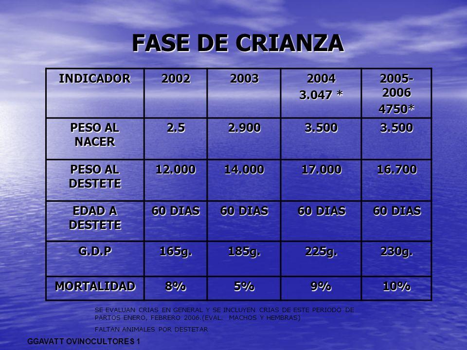 FASE DE CRIANZA INDICADOR200220032004 3.047 * 2005- 2006 4750* PESO AL NACER 2.52.9003.5003.500 PESO AL DESTETE 12.00014.00017.00016.700 EDAD A DESTET