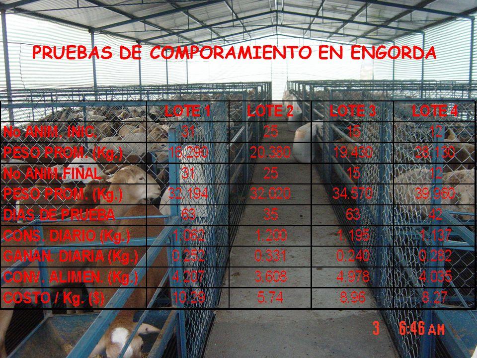 PRUEBAS DE COMPORAMIENTO EN ENGORDA
