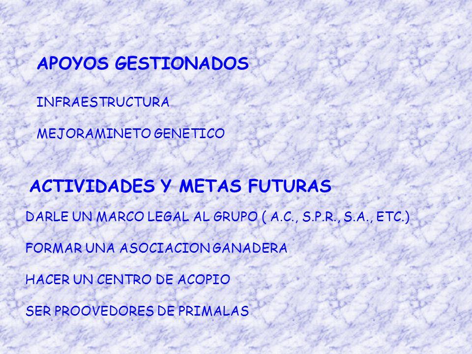 ACTIVIDADES Y METAS FUTURAS DARLE UN MARCO LEGAL AL GRUPO ( A.C., S.P.R., S.A., ETC.) FORMAR UNA ASOCIACION GANADERA HACER UN CENTRO DE ACOPIO SER PROOVEDORES DE PRIMALAS APOYOS GESTIONADOS INFRAESTRUCTURA MEJORAMINETO GENETICO