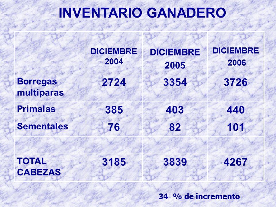 INVENTARIO GANADERO DICIEMBRE 2004 DICIEMBRE 2005 DICIEMBRE 2006 Borregas multiparas 272433543726 Primalas 385403440 Sementales 7682101 TOTAL CABEZAS 318538394267 34 % de incremento
