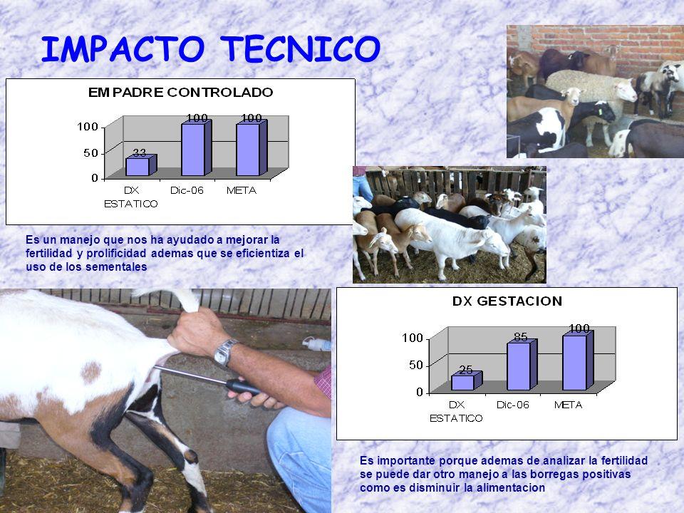 IMPACTO TECNICO Es un manejo que nos ha ayudado a mejorar la fertilidad y prolificidad ademas que se eficientiza el uso de los sementales Es importante porque ademas de analizar la fertilidad se puede dar otro manejo a las borregas positivas como es disminuir la alimentacion