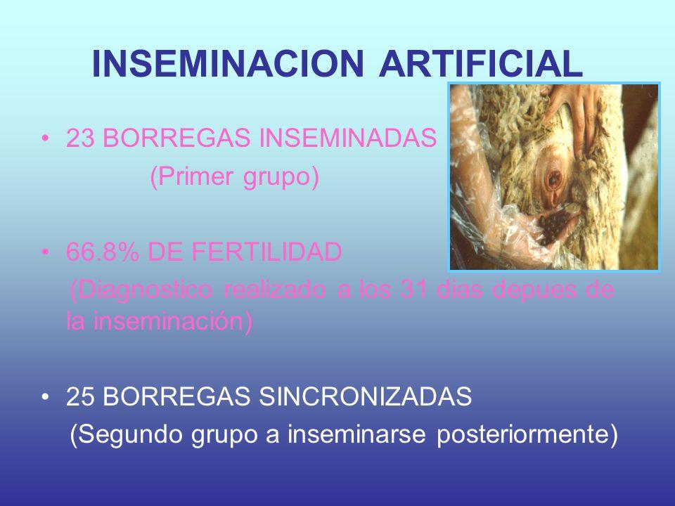 INSEMINACION ARTIFICIAL 23 BORREGAS INSEMINADAS (Primer grupo) 66.8% DE FERTILIDAD (Diagnostico realizado a los 31 dias depues de la inseminación) 25 BORREGAS SINCRONIZADAS (Segundo grupo a inseminarse posteriormente)