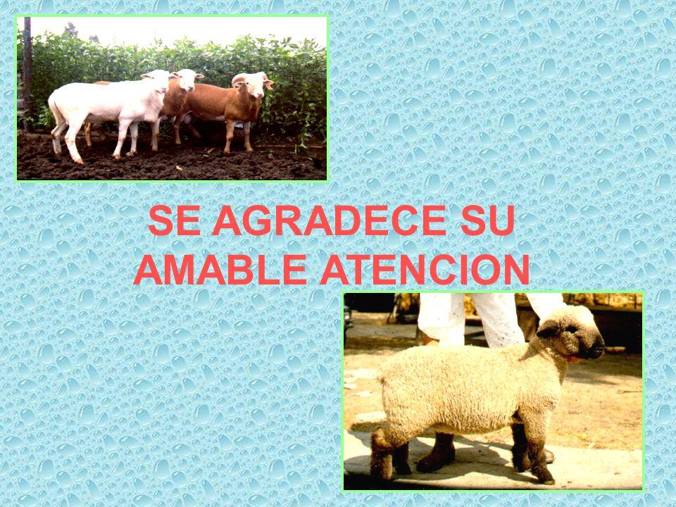 SE AGRADECE SU AMABLE ATENCION