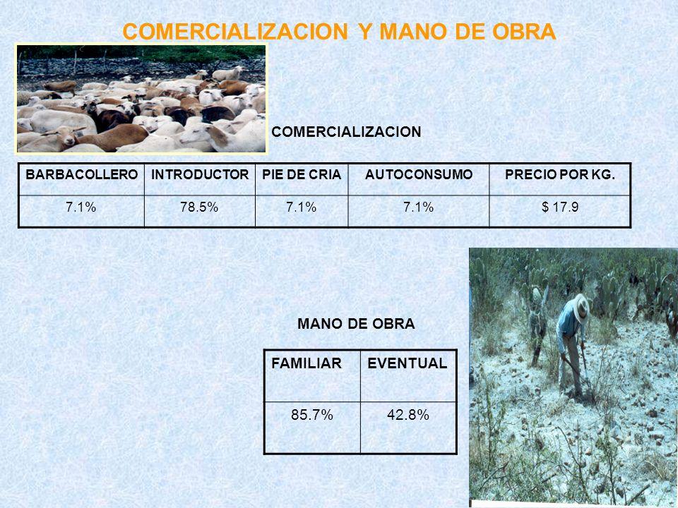 COMERCIALIZACION Y MANO DE OBRA COMERCIALIZACION MANO DE OBRA BARBACOLLEROINTRODUCTORPIE DE CRIAAUTOCONSUMOPRECIO POR KG. 7.1%78.5%7.1% $ 17.9 FAMILIA